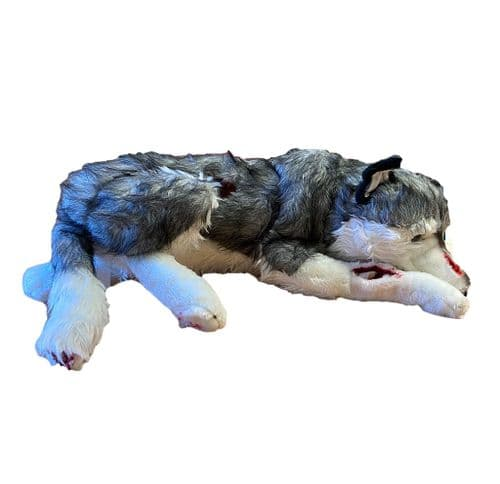 Casualty Simulation Dog - Husky