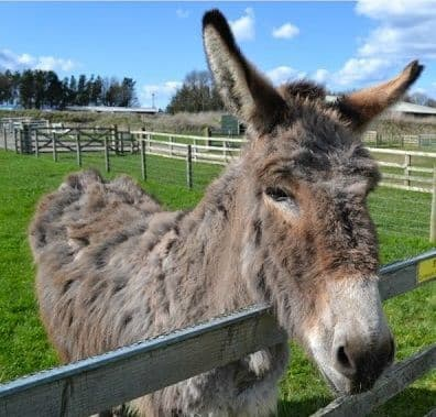 Donkey - Feeds / Diets
