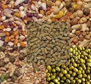 Poultry - Feeds & Mixes