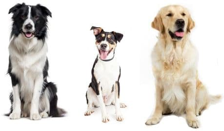 GRAIN FREE SAMPLE PACK FOR DOGS