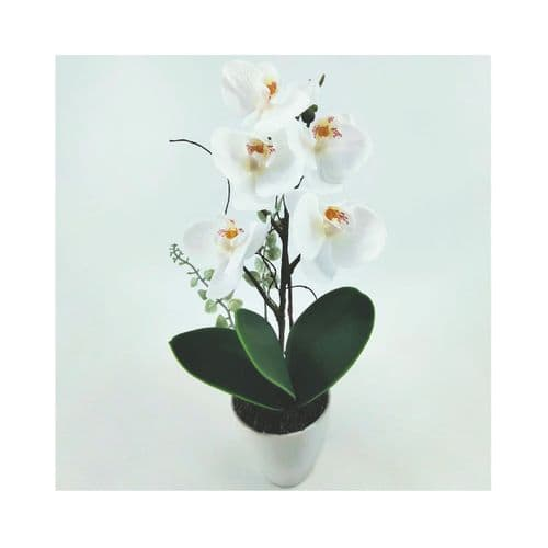 28cm White Real Touch Orchid Flower in Display White