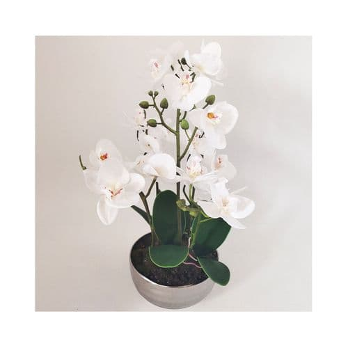 35cm White Real Touch Orchid Flower in Display Chrome Pot
