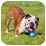 Beco Pets Eco Friendly Treat  Ball Dog Toy All Sizes