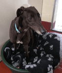 Fen Bank Greyhound Sanctuary Vet Bed Bundle £20