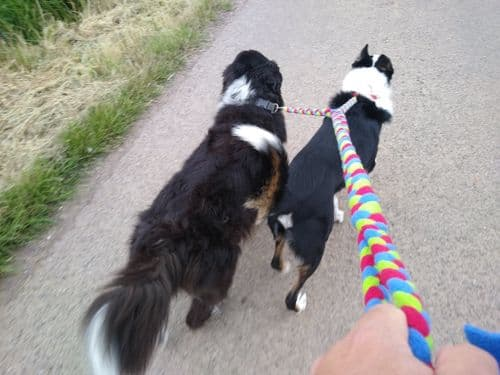 Paws Made Tight Plaited Double  Ended Dog  Split Lead  walk 2 dogs