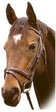 Sabre Richmond Snaffle Bridle (English, Flash & Grackle Nosebands)